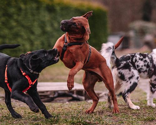 Hundeschule-Hundezentrum-Deutschland-100