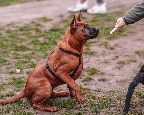 Hundeschule-Hundezentrum-Deutschland-103