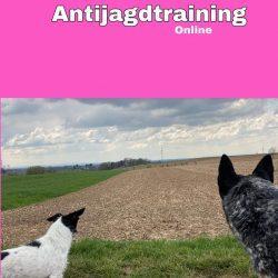 Antijagdtraining-online