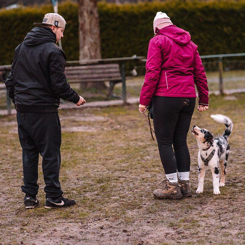 Hundeschule Hundezentrum Deutschland Hanau Frankfurt