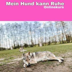 mein-hund-kann-ruhe-online